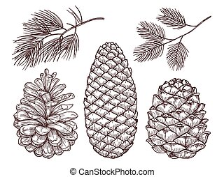 main, dessiné, forêt, vector., sketched, pin, branches, et, pinecones