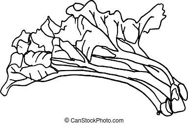 main, dessiné, rhubarbe, (vector)