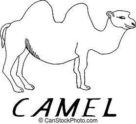 Dessiner main chameau tatouage dessiner utilis - Dessiner un chameau ...