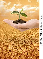 main, plante, la terre, droughty