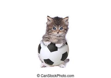 Maincoon Kitten With a Soccer Ball