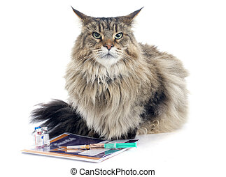 maine coon and syringe in front of white background