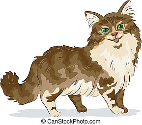 Maine Coon Cat - Illustration of Maine Coon Cat