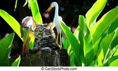 Maine coon cat in nature sitting on a tree stump