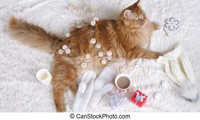 Maine Coon cat on a white fluffy blanket lies in the Christmas decorations. animal game with garland