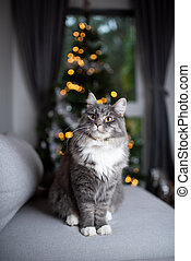 maine coon cat sitting in front of christmas tree