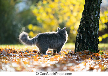 maine coon cat standing next to tree on autumn leaves