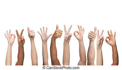 mains humaines, projection, pouces haut, ok, et, signes paix
