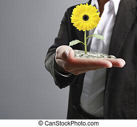 mains humaines, tenue, plante