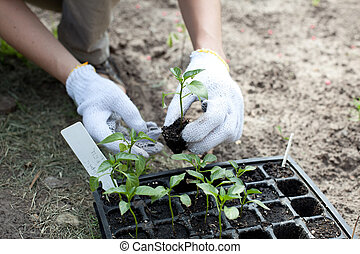 mains humaines, tenue, vert, petit, plante