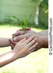 mains, tenant bébé, vieux, jeune homme, plante