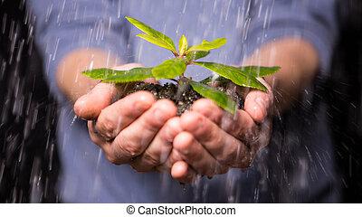 mains, tenue, pluie, plant