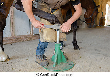 maintenance of the hoof