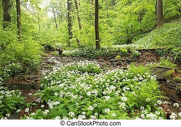 maio, primavera, floresta