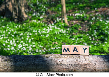 maio, primavera, verde, jardim, sinal