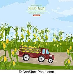 mais, stagione, granaglie, autunno, camion, vector., campi, illustrazioni, raccogliere