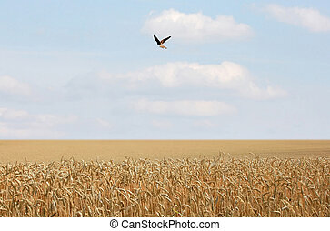 maisfeld, vogel