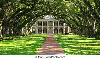 maison, allée chêne, plantation, méridional, louisiane