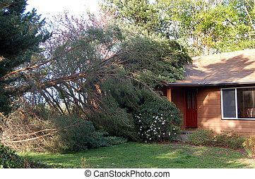 maison, arbre, baissé