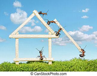 maison bois, construire, fourmis, équipe