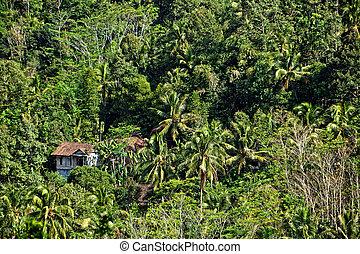maison bois, jungle