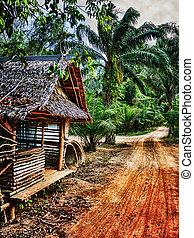 maison bois, vieux, abandonnés, tropiques