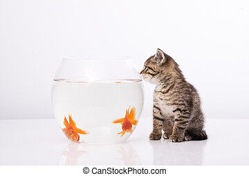 maison, chat, et, a, poisson or