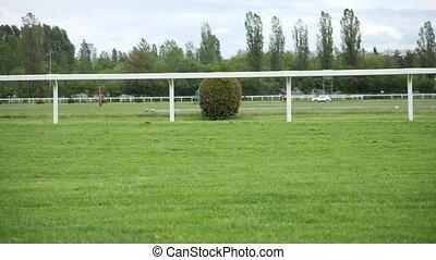 maison, cheval, jockey, directement, course