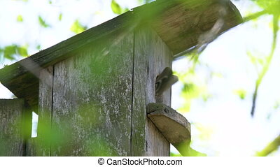 ), maison, dehors, gosses, oiseau, arbre., étourneau, ...