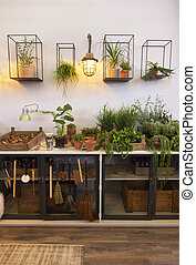 maison, espace, terrasse, jardin