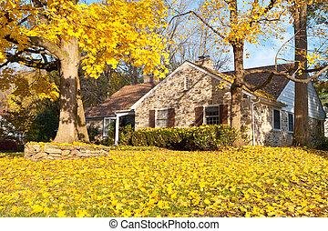 maison, feuilles, arbre, philadelphie, jaune, automne, automne