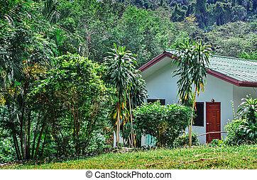 maison, jungle, rainforest