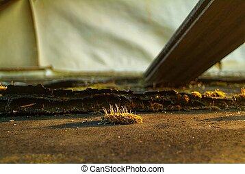 maison, mousse, toit, pays