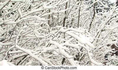 maison, neige, niché