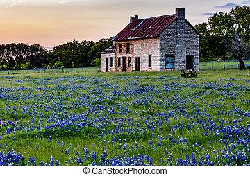 maison, wildflowers., vieux, texas