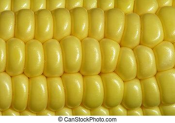 Maize - Close-up of a maize cob