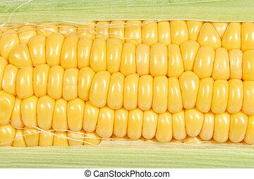 Maize ear closeup