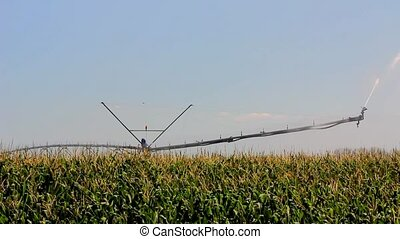 Maize irrigation - Sprinkler irrigation in a maize field in...