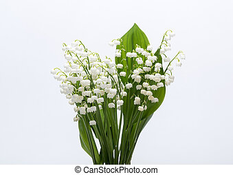 majalis), lis, isolé, blanc, vallée, (convallaria