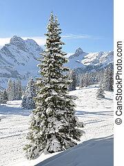 majestätisch, schweiz, ansicht., braunwald, alpin