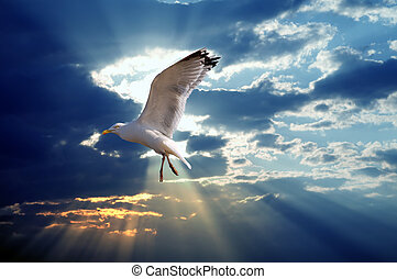 majestätisch, sonnenuntergangshimmel, vogel, gegen