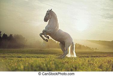 majestatyczny, fotografia, koń, królewski, biały