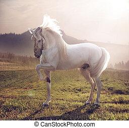 majestatyczny, obraz, biały koń