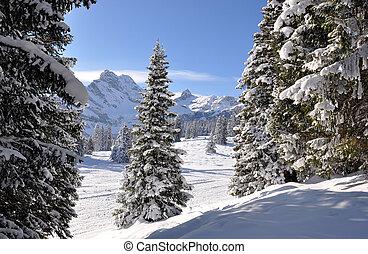 majestatyczny, szwajcaria, prospekt., braunwald, alpejski