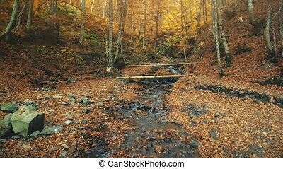Majestic autumn highland forest creek scenery - Majestic...