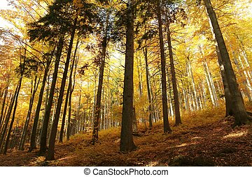 Majestic autumnal forest