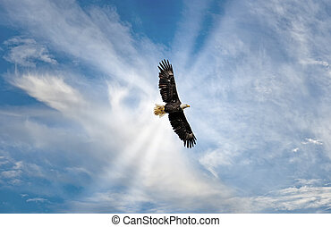 Majestic Bald Eagle Flying in the Clouds with sunrays