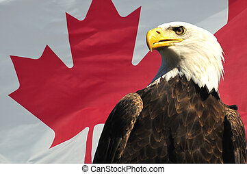 Bald Eagle in front of Canadian Flag