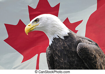 Bald Eagle looking sideways in front of Canadian flag