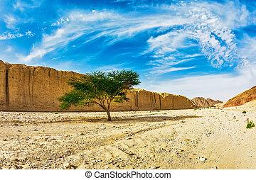 The stone desert in Eilat mountains